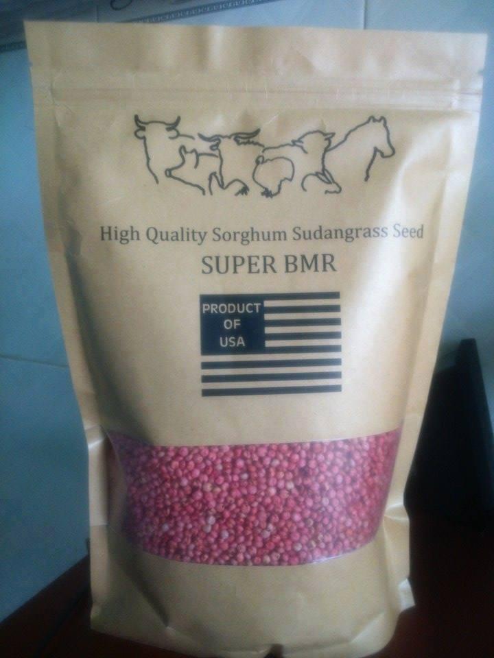 Hạt giống cỏ lai Super BMR